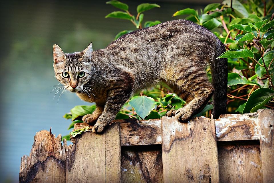 ¿Qué tener en cuenta antes de contratar un seguro para mascotas?