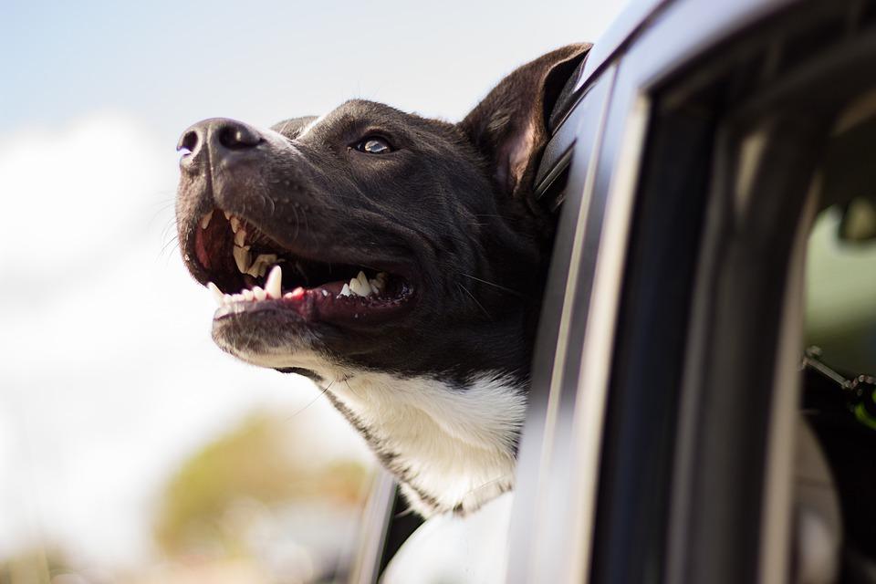 ¿Qué cubre y qué no cubre nuestro seguro para mascotas?