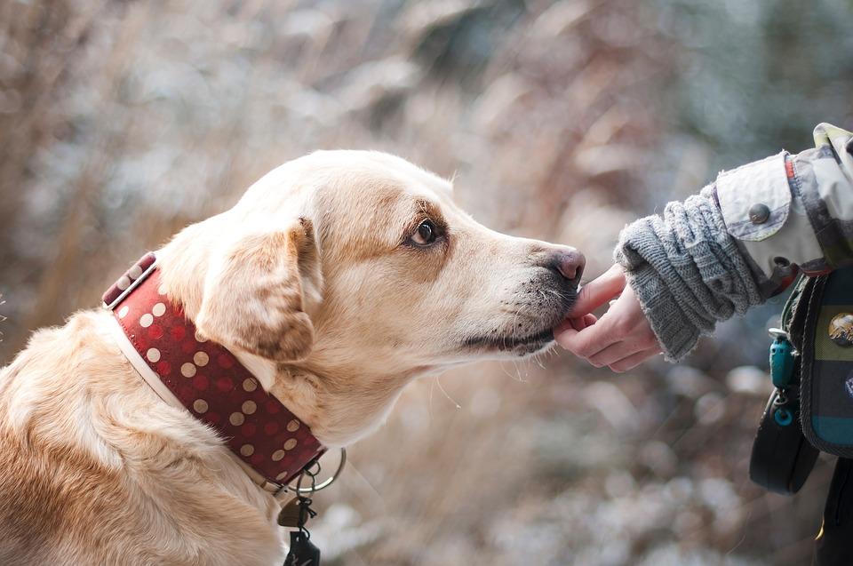 15 ventajas de contratar un seguro para perros