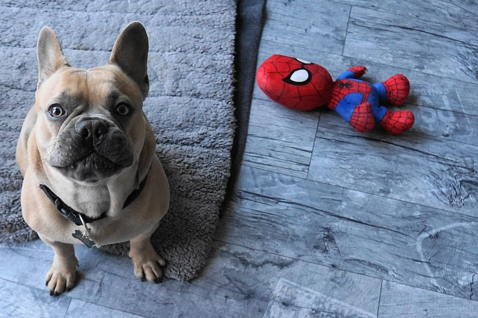 Los mejores juguetes antiestrés para perros
