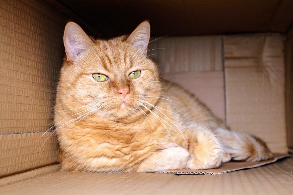 caja carton agujero gato