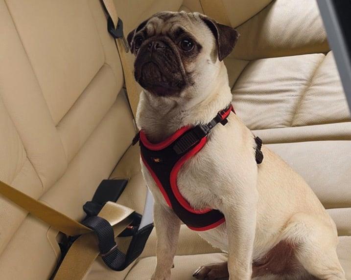 cinturon seguridad perro coche