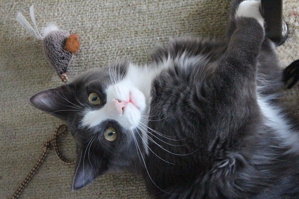 juguete casero gato