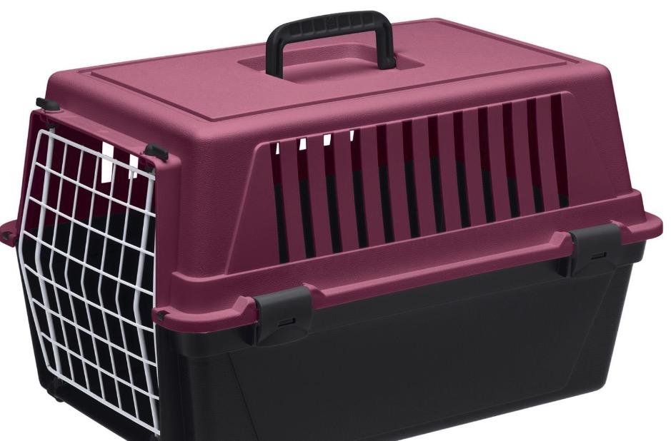 transportin gato perro